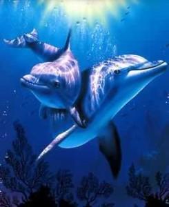 delfines-enamorados