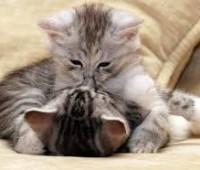 Tiernas imágenes de amor con gatitos enamorados