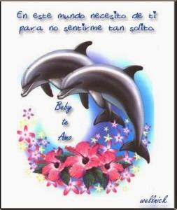 frase-de-amor-con-delfines