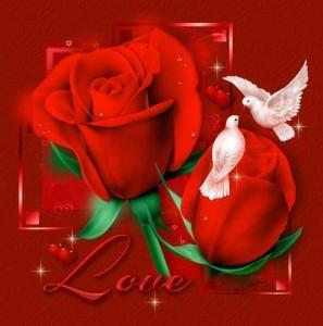 imagenes-de-flores-amor-04