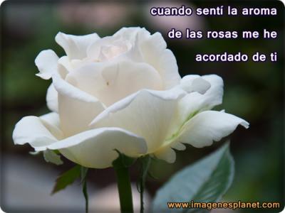 imagenes de rosas de amor