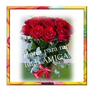 lindas rosas parati
