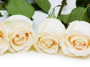 rosas blancas 1