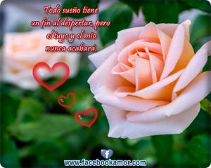 flores-de-rosas-bonitas-con-frases-de-amor-para-facebook