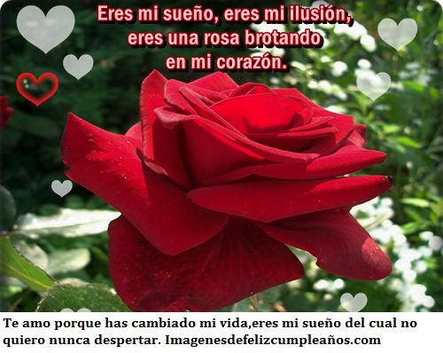 Rosas Rojas Con Frases De Amor: Imágenes De Rosas Rojas Con Lindas Frases De Amor