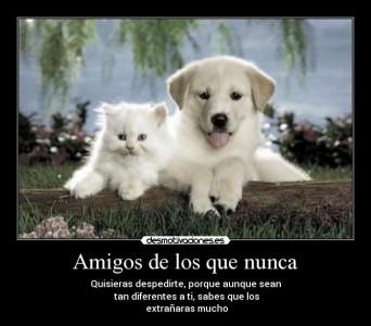 Amigos_despedirse_xdiegob_diego4214
