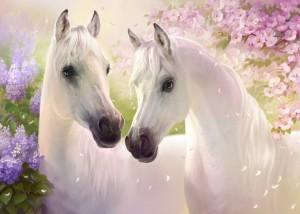 Caballos-blancos-enamorados