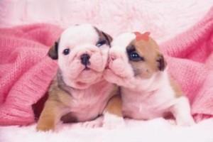 imagenes-de-perritos-enamorados-3