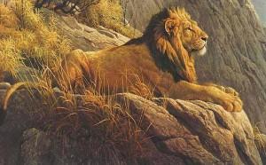 paisajes-y-animales (2)