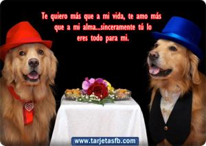 tarjetas+ de+ perro+ con+ frases+ de+ amor+ para+ facebook