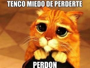 Frases-De-Amor-Para-Pedir-Perdon-A-Mi-Novia-9-300x227