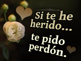 si_te_he_herido-t21