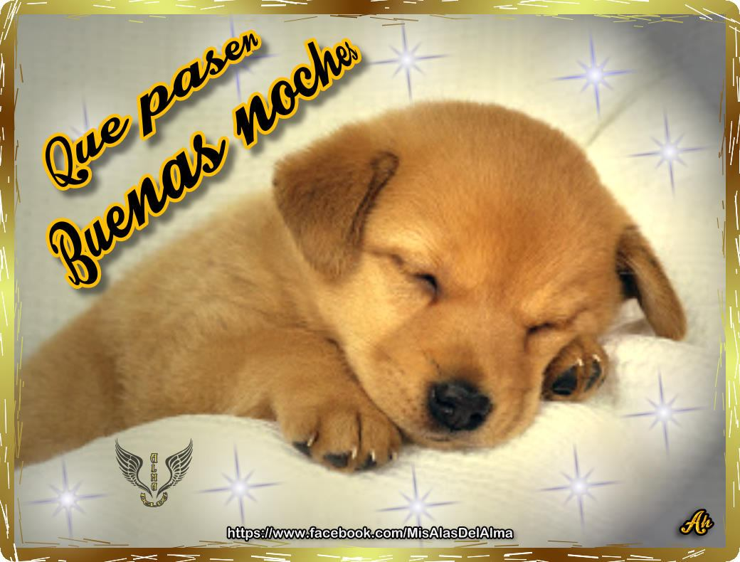1_buenas_noches_perrito