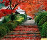 Imágenes de paisajes de flores hermosas