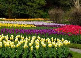 paisajes de flores en bosqe