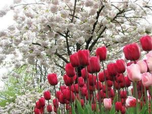 paisajes de flores hermosos