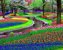 paisajes de flores lindos