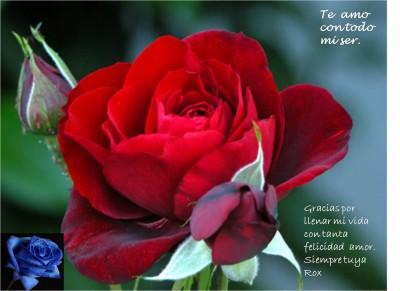una-rosa-para-mi-amor