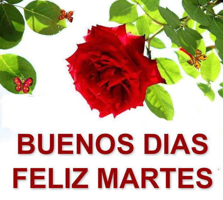 Imágenes de rosas con frases de feliz martes | Imagenes de ...