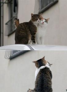 gatos-enamorados