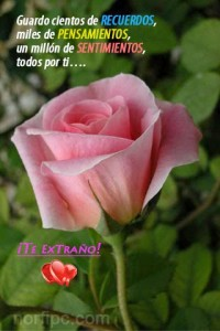 imagenes-de-amor (9)
