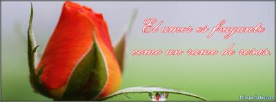 imagenes de rosas con farses de amor para portadas de facebook