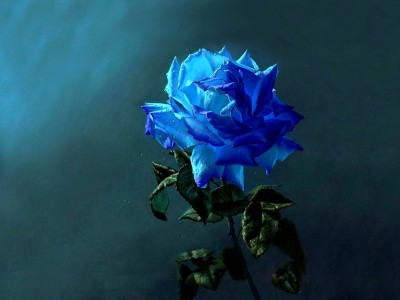 love-in-blue-petals
