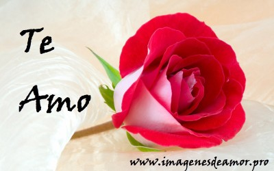 rosa-espectacular