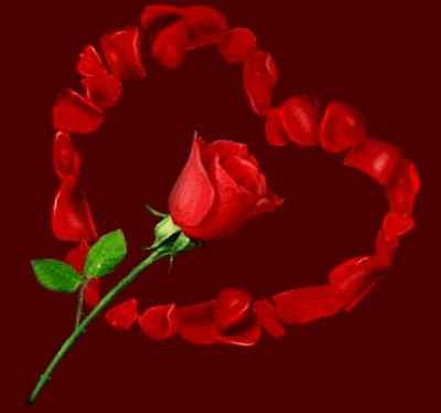 Imágenes de rosas para enamorar  Imagenes de amor gratis