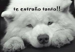 Imagenes_de_Amor_y_Frases_de_Amor_Te_Extra_o_8