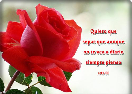 Imágenes de rosas con dedicatoria para un amor | Imagenes