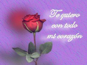 imagenes-de-rosas
