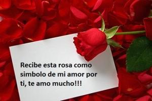 rosa-de-amor-bella
