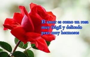 rosas-de-amor_el-hombre