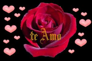 super romantica rosa roja con corazones rosados te amo 12-04-2010 05-49-57 p.m. 1024x683