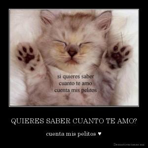 desmotivaciones.mx_QUIERES-SABER-CUANTO-TE-AMO-cuenta-mis-pelitos-_132632596870