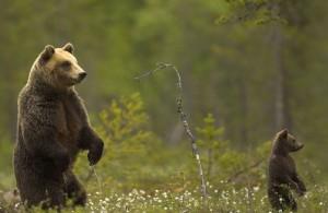 Paisajes-animales-habitan-Artico_NACIMA20121227_0407_3