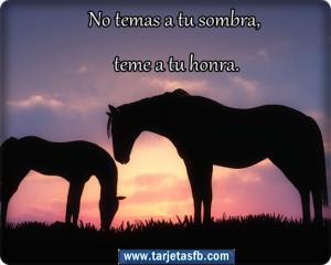 Tarjetas+ de+ caballo+ con+ frases +lindos+ para+ etiquetar +en+ tu+muro