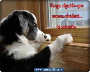 Tarjetas+ de+ perro+ con+ frases+ de+ amor +para+ etiquetar+ en+ tu+ muro