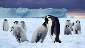 fondo_hd_169_pinguinos_pareja