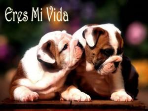 imagenes-de-perritos-de-amor-eres-mi-vida