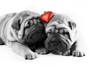 imagenes-de-perritos-enamorados-5