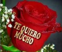 Imágenes de rosas hermosas con frases te quiero mucho