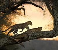 Paisajes hermosos de animales