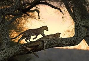 paisajes y animales