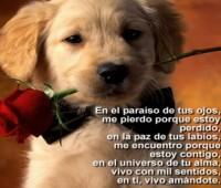 Imágenes de perros enamorados con frases