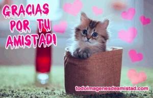 imagenes-de-gracias-por-tu-amistad-con-gatito