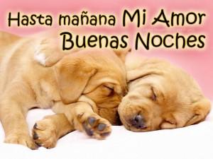 perritos-dormir