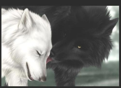 imagenes-de-lobos-enamorados